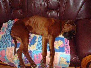 weboldal kutya tulajdonosa találkozó)