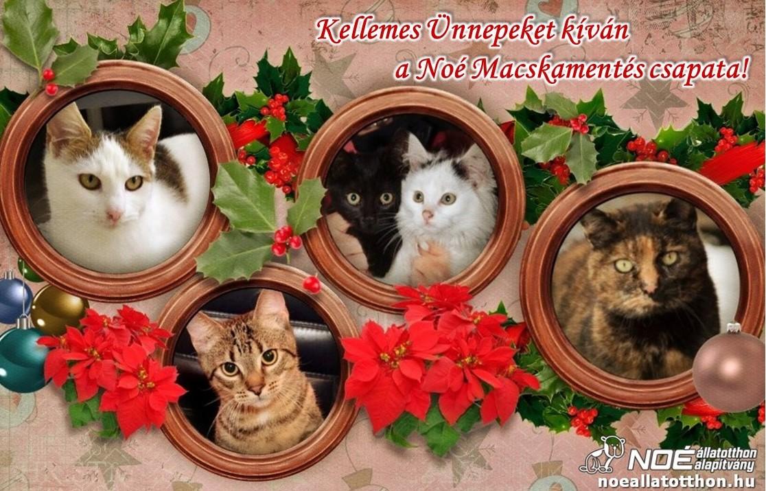 Noé Macskamentő csoport 2019.12.08 Állatok Karácsonya!