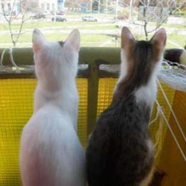🐈 A macska faroktörése - 5 tünet, típus, kezelés